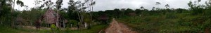 En Ayahuasca amaranti